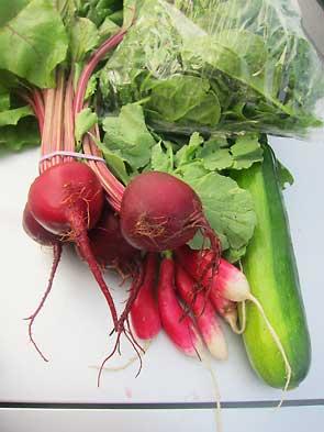 beets, radish, spinach, and zucchini
