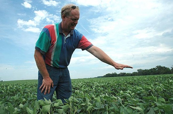 The soybeans at Craig Corry's Miami  Township farm only reach to his knees, when they should be nearly waist high at this point in the season. The moderate drought in the Dayton area has stunted the growth of area soybeans and corn, threatening to cut into yields. (Photo by Megan Bachman)