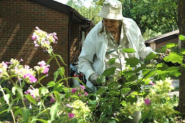 Marilyn Van Eaton weeds a large area of perennial plants that she tends in front of her Lawson Place residence.  (Photo by Megan Bachman)