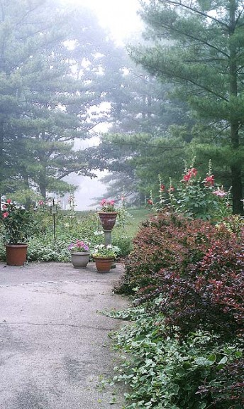 Carol Siyahi Hicks' garden