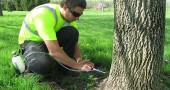 On May 3 a Tree Care Inc. technician treated white ash and blue ash trees in the Ellis Park and Lloyd Kenney Arboretum by injection into the tree trunk. (Submitted photo)