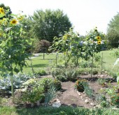 One of community garden plots in Bill Duncan Park last July. It's not too late to get a garden plot of your own!