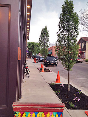 new trees on Xenia Ave