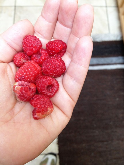 homegrown red raspberry