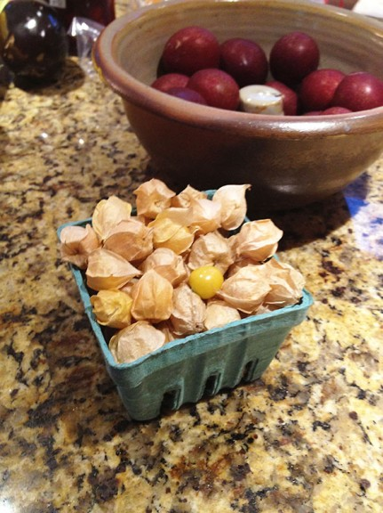 pint of ground cherries