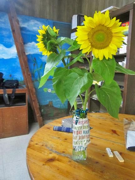 sunflower Against Mural