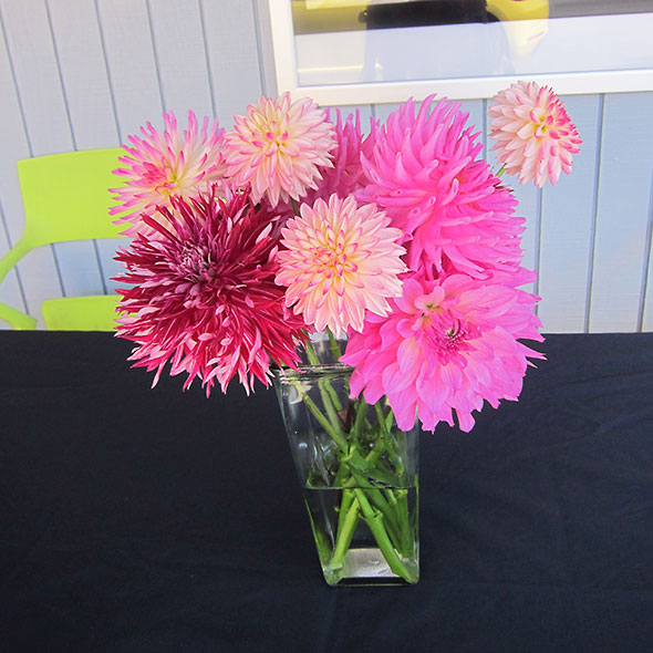 dahlias At Little Art