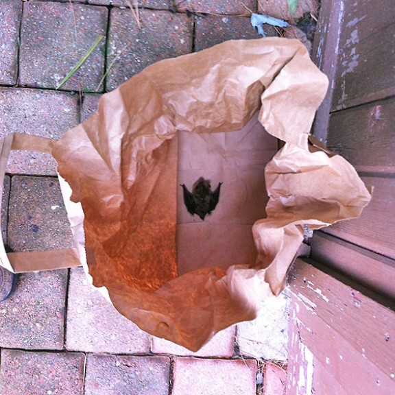 bat in a bag
