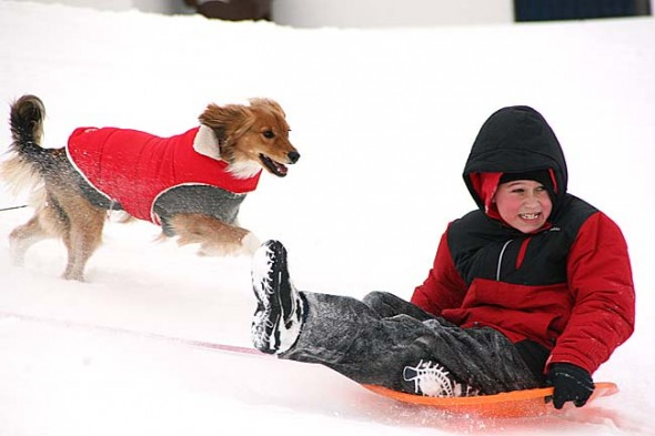 Polly and Carl Cordell's grandson, Cory, visiting from Westerville, took advantage of the warmer weather and went sledding with his dog, Nala, and father, Cary. (Photo by Suzanne Szempruch)