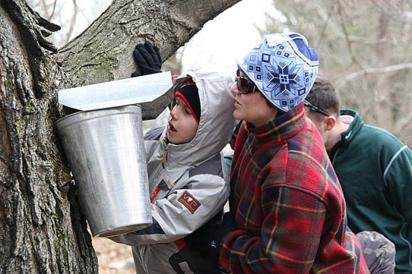 Shown above are Caleb and Teresa Adkins of Springfield, checking out one of the many maple sap collection buckets at Flying Mouse Farms annual open house. (Photo by Suzanne Szempruch)