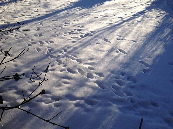 Critters scurried across freshly fallen morning snow in this photo from February of last year. The Yellow Springs School District has decided to close schools Tuesday, Jan. 6, because of similar conditions. (News Archive photo by Matt Minde)