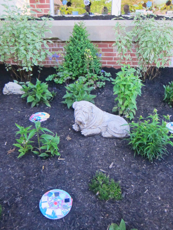 bulldog in his garden