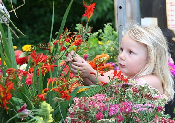 Kaylee Clark, 3, carefully chooses flowers for an arrangement (Photo by Suzanne Szempruch)