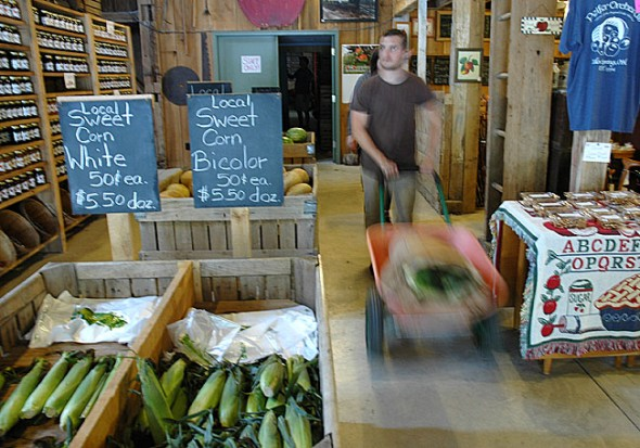 Antioch College food sustainability coordinator Isaac Delamatre carted over a dozen of Peifer Orchard watermelons back to campus for the week's fruit basket.