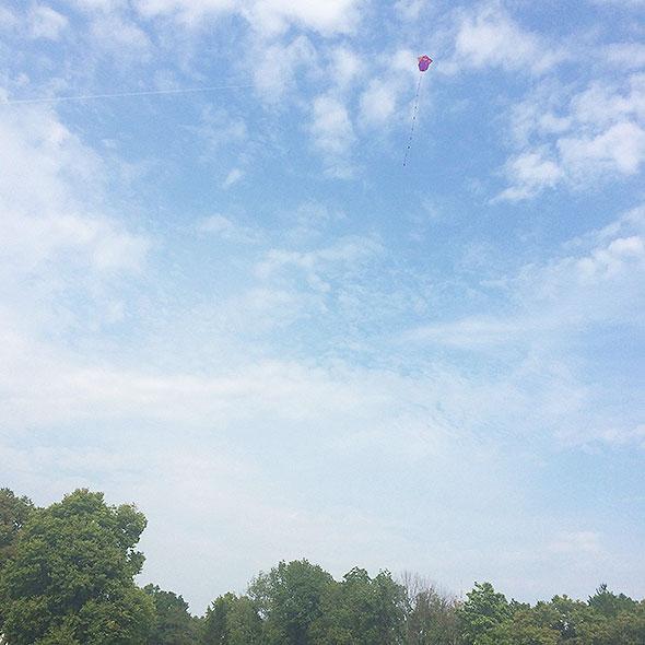 The cat kite takes flight.
