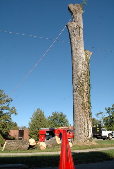 The remnants of two old ash trees killed by the emerald ash borer were felled Oct. 8. (Photos by Matt Minde)