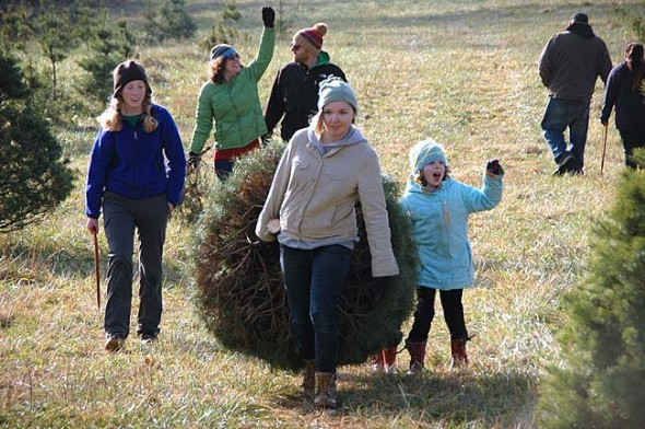 Here, students Cecelia Comerford, left, and Anna Mullin cut and dragged one perfect spruce for an excited Lucy and her family Luke, Sally and Oskar Dennis (behind the tree).