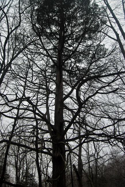 Aaron's Lens - A Dark Forest