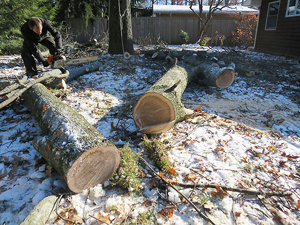 cutting the big logs down to size