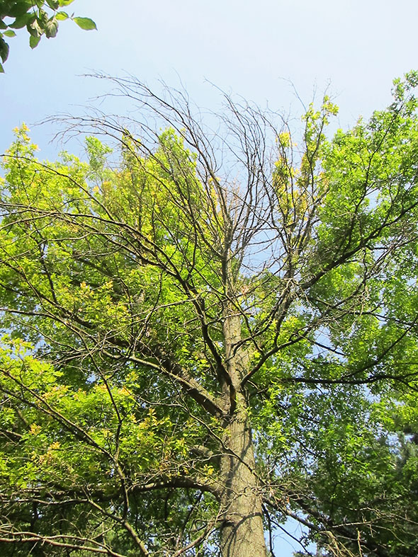 tree's east side in Spring