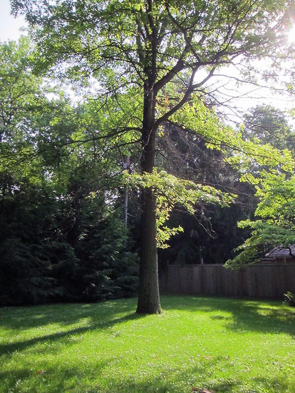 A pleasant spot under our pin oak