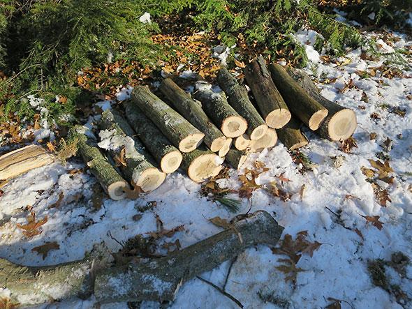 stack of medium logs