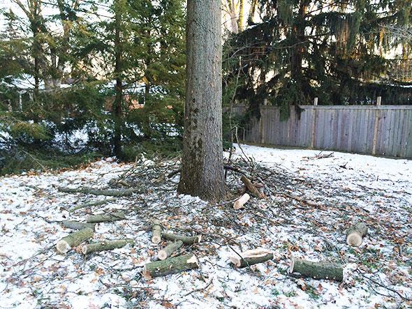tree litter
