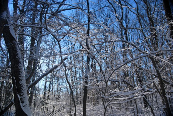 Frosted branches give the forest a crystalline outline in the winter months. (photo by Aaron Zaremsky)