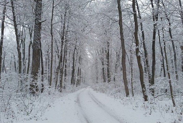 Snow and slick conditions have delayed Yellow Springs Schools by two hours Tuesday, Nov. 12. (Photo by Aaron Zaremsky)