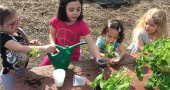 Students at the Yellow Springs Community Children's Center, from left, Brooklyn Markgraf, Neveah Plambeck, Dylan Cole and Lilly Brown, planted shamrocks in the school yard on Monday in celebration of St. Patrick's Day this week. The center is working hard to recover from several years of financial hardship and has recently welcomed two new interim directors and five new board members, all with extensive nonprofit management experience. (Submitted photo by Andrea Seigel-Hall)