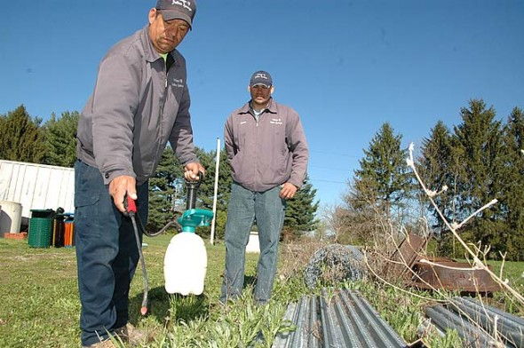 Jason Hamby, right, superintendent of streets, sewers and parks, looked on as his crew member Kent Harding recently tested a new, all-natural, vinegar-based spray to kill weeds  without the use of synthetic chemicals at the public works headquarters at Sutton Farm. The Village is exploring alternative methods and products to conventional herbicides on public property this summer while a new pesticide policy is developed. (Photo by Megan Bachman)