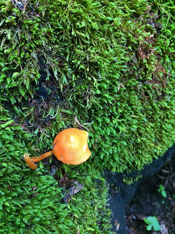 mushroom among moss