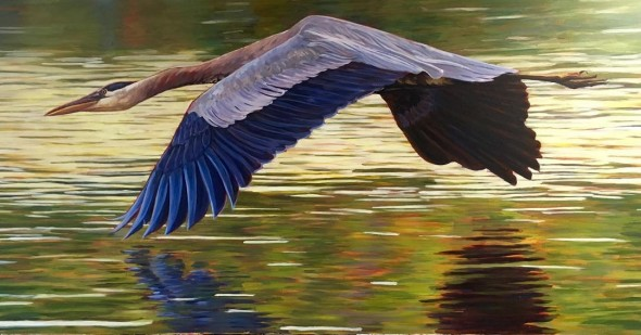 """Wings like water. Travis Tarbox Hotaling, """"Great Blue Heron,"""" 2015. One of seven bird portraits now on display at the Yellow Springs Brewery."""