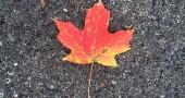 autumnLeafOnAsphalt