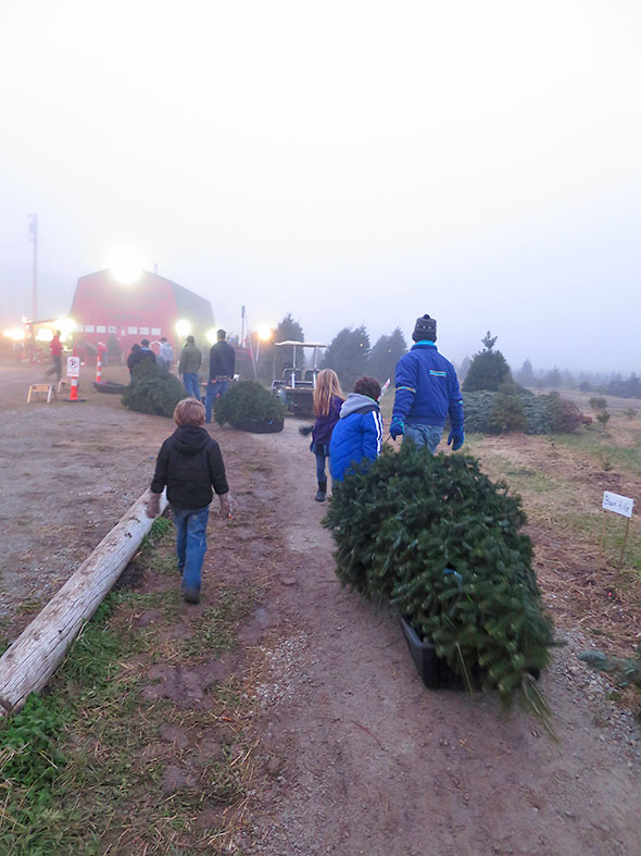 join the queue at Young's Tree Farm