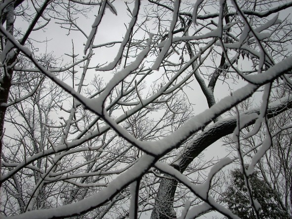 "A backyard game of Tic-Tac-Toe, and tree wins with a snow-crossed ""X."" (Photo by Audrey Hackett)"