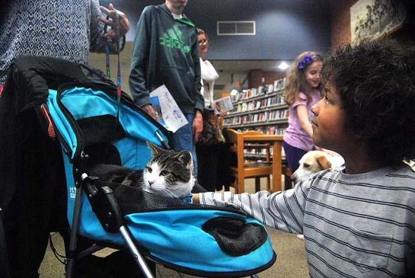 Quincy crashed the party recently at the Yellow Springs Library when the library's monthly Reading to the Dogs event took place. Shown above, Jaden Thomas showed Quincy some love even though Quincy appears to be the wrong species. (Photo by Aaron Zaremsky)