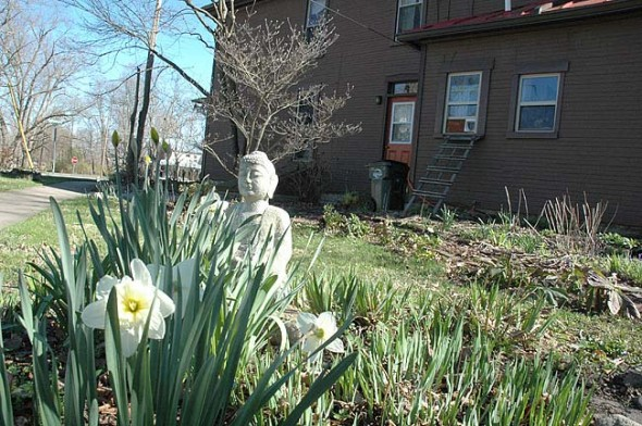 The Buddha peeks out from behind spring daffodils. (Photo by Matt Minde)