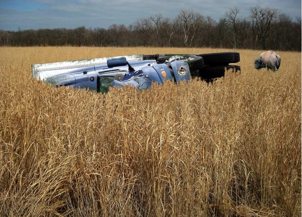 The year-old wreck of a tractor-trailer that was carrying rare prairie grass seeds provides an unorthodox environment for a fragile ecosystem.
