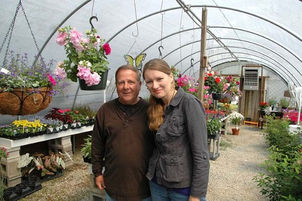 Master gardeners Steve and Karen Reed are the owners of Stoney Creek Garden Center, located just north of Yellow Springs on Route 68. Deeply aware of the legacy of Stutzman's Nursery, which occupied the spot for many years, the Reeds are both bringing the Village-owned property back to life and making it their own. Their greenhouses include these hanging pots of fragrant double cascade petunias. (Photo by Audrey Hackett)