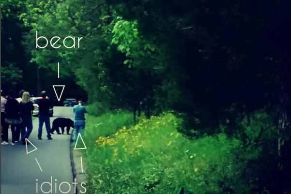 bear vs. idiots