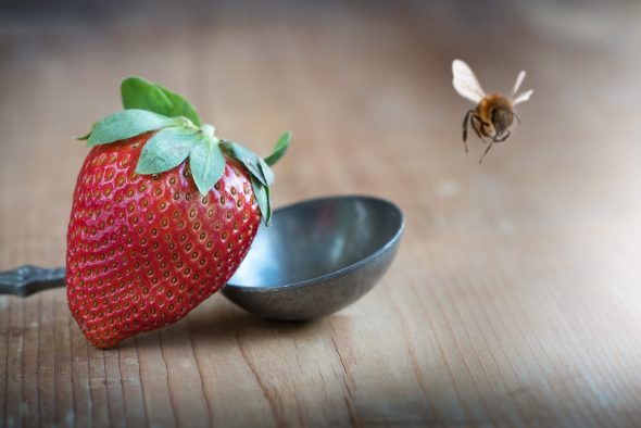 The annual Strawberry Festival will be held on Friday and Saturday, June 8 and 9, and will be kicked off with a Cutting Bee on Friday morning.