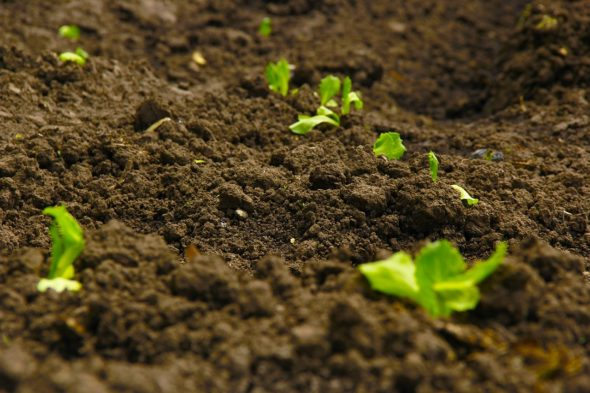 The Arthur Morgan Institute for Community Solutions will hold a Soil Symposium Feb. 24 and 25.