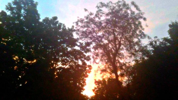 The sunset view from my beautifully wooded and greatly admired (by me) backyard.