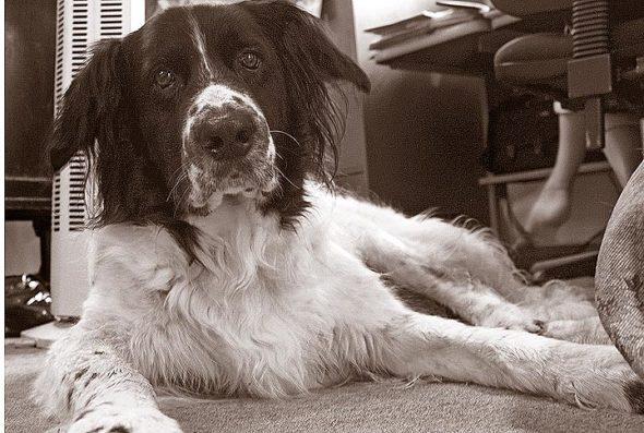 Tucker the Original Newshound