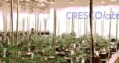 Cresco Labs's application for processing medical marijuana was not approved by the state. (Photo by Megan Bachman)