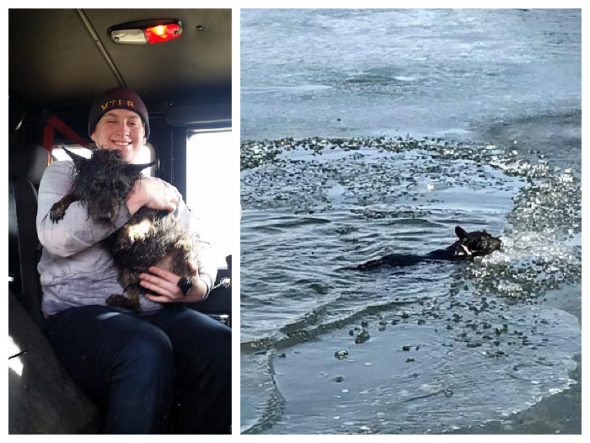 Firefighter/EMT Nick Miller-Jacobson warming up with rescued dog, Sissy, who, at right, is shown struggling in the frozen pond. (Photos by David See)