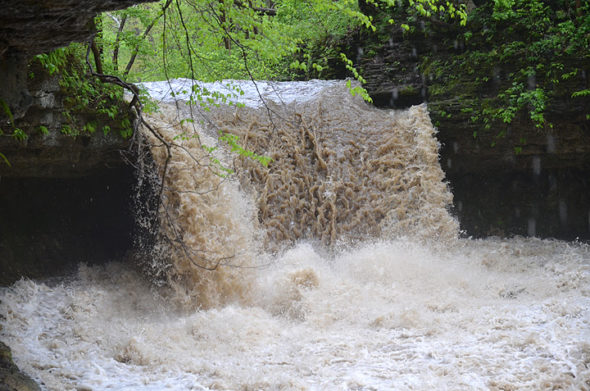 On the morning of Friday, May 3, Yellow Springs received a deluge of rain. Both Yellow Springs Creek and Birch Creek rushed rapidly on their muddy courses through the Glen Helen Nature Preserve. At top, Birch Creek cascades on May 3. (Photos by Megan Bachman)