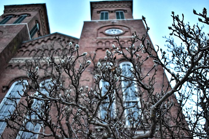 Antioch College Main Building with blooming magnolia trees