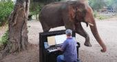 Elephant test